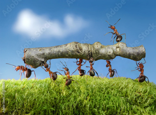 Foto op Canvas Dragen ants carry log with chief on it