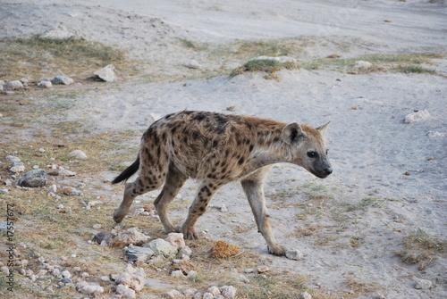 Papiers peints Hyène Hyäne