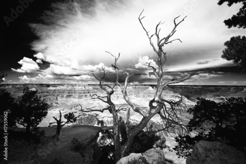 Leinwandbild Motiv Tree on the edge of the Grand Canyon