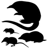 silhouette of the mole, mouse and desmans poster