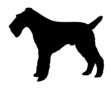 silhouette of the fox terrier isolated on white background