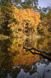 Autumn forest reflected on the water