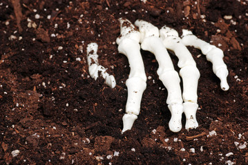 skeleton hand in dirt