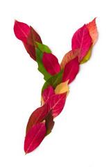 Blätterbuchstabe Y