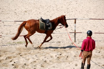 lunging the horse