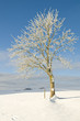Winterbäume_1