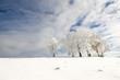Winterbäume_6