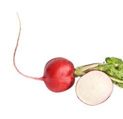 Radish with leaves isolated on white background