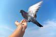 Pigeon on hand