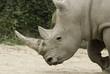 Rhinoceros Granby zoo Quebec canada