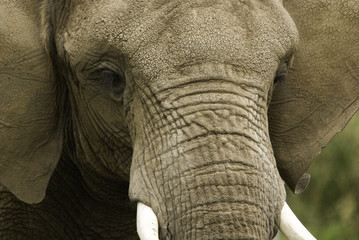 Elephant Granby zoo Quebec Canada