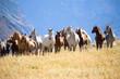 Fototapeten,pferd,berg,tier,tier
