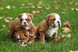 Litter of Three English Bulldog Puppies in Leaves
