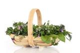 Fototapety Fresh Herbs