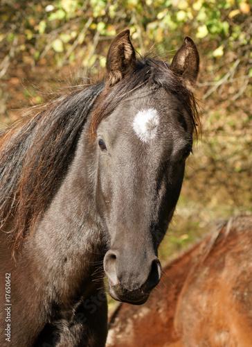 Fototapeten,pferd,zucht,pferd,rasse