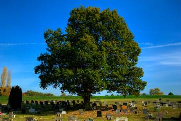 Giant oak tree in fresh autumn sun, leaves turning colour
