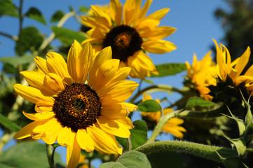 Blumen 120