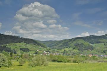 Schwarzwald im Fruehling