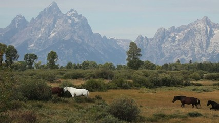 Herd of Horses Gathered Near Mountain Range