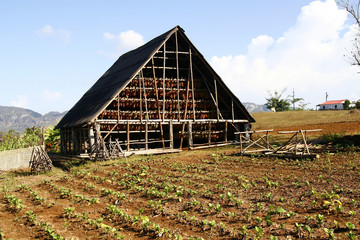 A barn used to store and dry harvested tobacco in Cuba