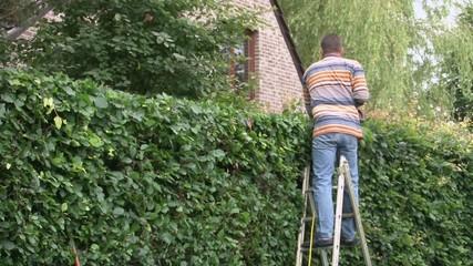 Gardener pruning the hedge