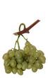 grappe de raisins Italia