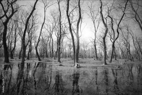 drzewa-czarno-biale