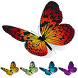 Colorful butterflies sitting on the surface  isolated on white