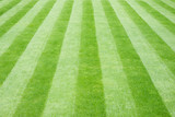 Real Grass Striped Lawn