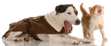 complaining animals - dog and cat barking and meowing poster