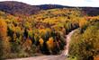 autumn woods dirt road