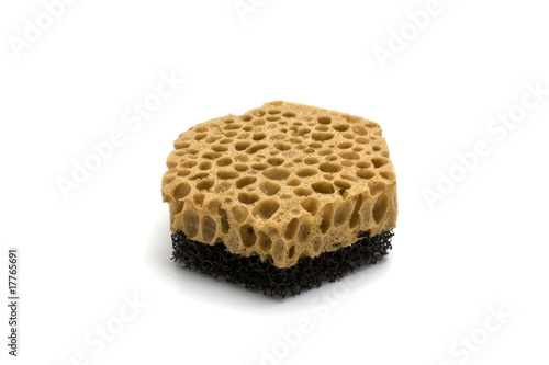 isilated sponge