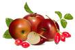 Vector illustration.  Red ripe apples and dogrose hips.