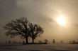 Tree in blowing snow & sunset