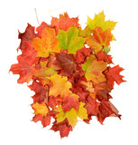 BLAZING FALL MAPLE LEAVES poster