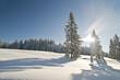 Winterbäume_8