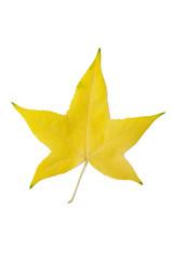 gelbes Blatt