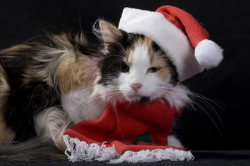 świąteczny kot 4