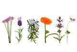Fototapety Herbs in Flower