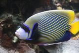 Fototapete Tauchend - Unterwasser - Fische