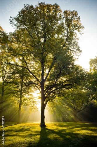 Fototapeten,baum,bäume,sonnenstrahl,sonne