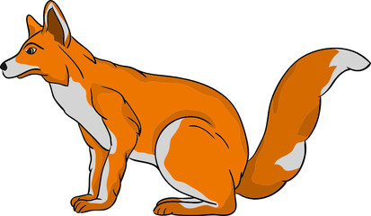 vector - fox isolated on background
