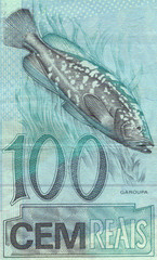 detail of the garoupa (Epinephelus lanceolatus)  100 real bankno
