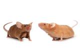 cute little mice poster
