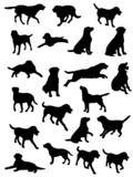 Fototapety labrador vector