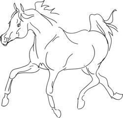 arab horse vector sketch