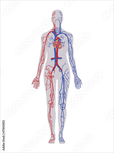 Photo Wallpaper - aorta - Mural, Poster, Stickers, Canvas