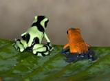 Fototapete Colorful - Gemauert - Reptilien / Amphibien