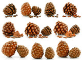 Set of Nuts and Cones of Siberian Pine Isolated on White