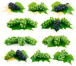 Set of Ripe Blue and Green Grapes Isolated on White
